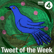 Podcast Tweet of the Week